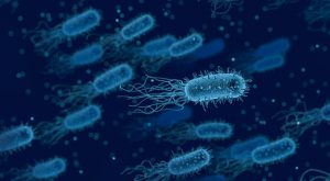 Kinergetics and Candida, micro-organisms, a thing of the past