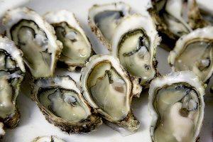 Healing Zinc- seafood